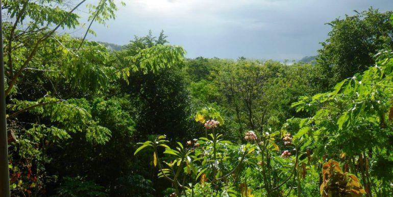 jungle-view