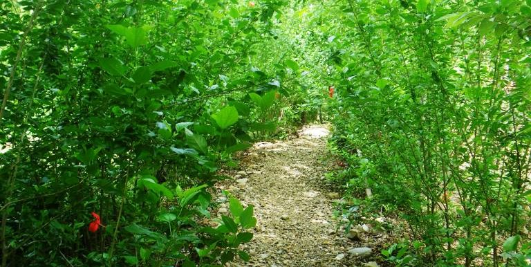 trail to our house