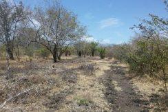 99 Acre Farm Property