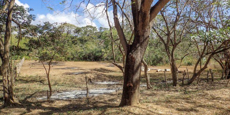 Half Acre Lot in Las Delicias