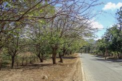 Half Acre Lot in Las Delicias