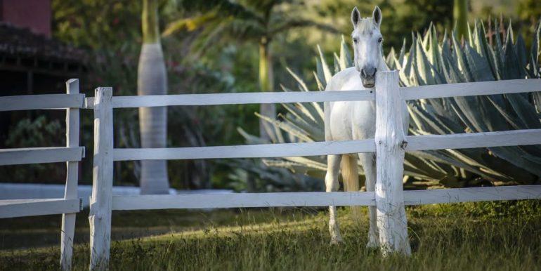 Turn Key Equestrian Estate