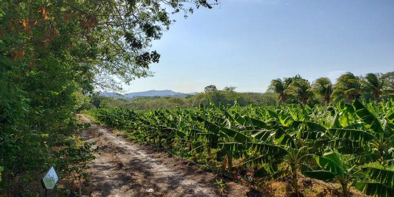 13 Manzana Banana Farm