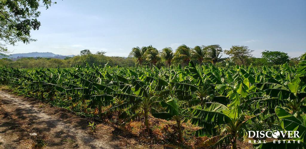 Three Phase 13 Manzana Banana Farm Between Rivas and Tola