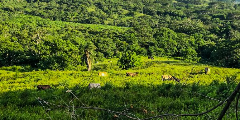 Miravalle Farm