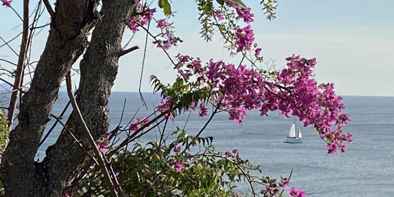 Casa Mariposa view of sailboat passing