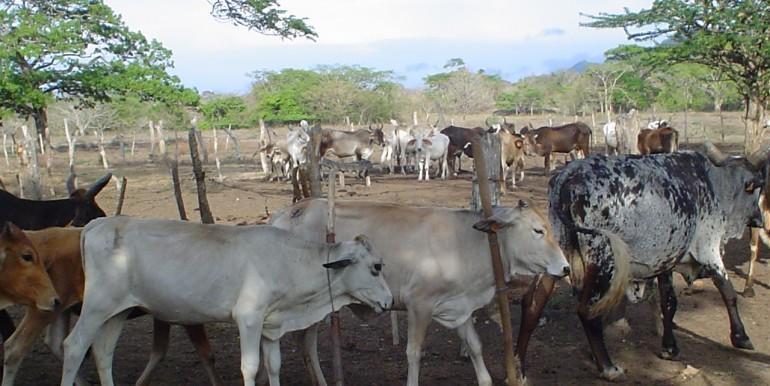 118 Acre Farm