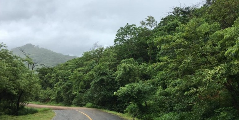 136 Acres of Lush Green Forest