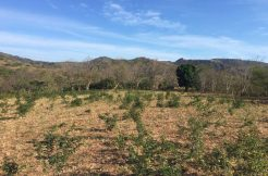 Unspoiled Jungle Property in Miravalle