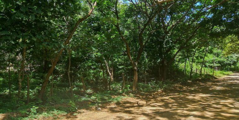 Heavily Wooded 11 Manzanas